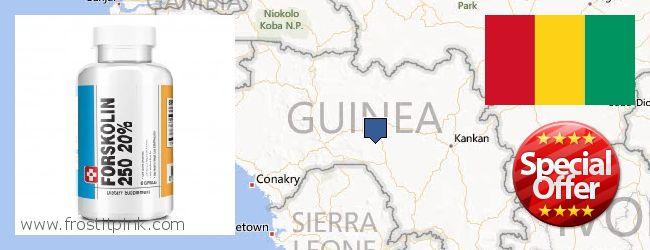 Buy Forskolin Extract online Guinea