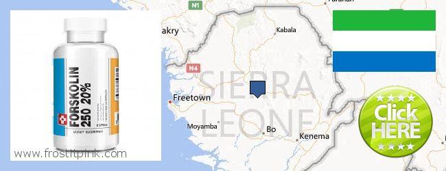 Where to Buy Forskolin Extract online Sierra Leone